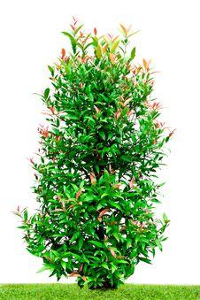 Free Tree Royalty Free Stock Photo - 20105335
