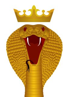 King Cobra Gold Stock Photo