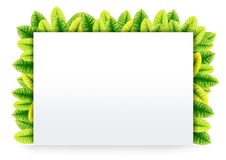 Free Blank Paper On Green Leaves Royalty Free Stock Image - 20105776