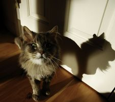 Free Old Cat. Stock Image - 20105891