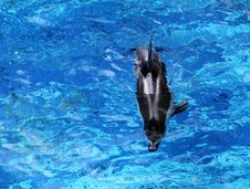 Free Dolphin Stock Photography - 20105942