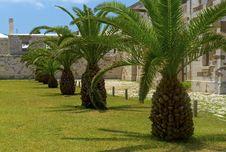 Free Tropical Trees Stock Photos - 20106653