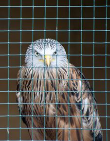 Free Red Kite Stock Images - 20106964