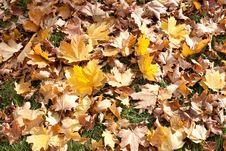 Free Autumn Park Royalty Free Stock Photo - 20107075