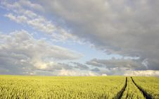 Free Crop Field In Summer Evening Royalty Free Stock Image - 20107096