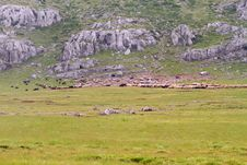 Free Sheep Flock On A Mountain Meadow Stock Images - 20107604