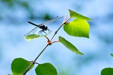 Free Dragonfly Stock Photos - 20108493