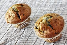 Two Blueberry Muffins Stock Photos
