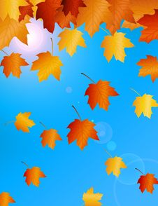 Free Autumn Morning Royalty Free Stock Images - 20111989