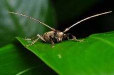Free Long Horn Insect - Front View Stock Photo - 20112710