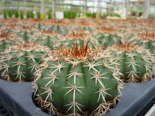 Free Cactus Stock Images - 20112714