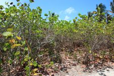 Free Mangrove Forest Royalty Free Stock Photo - 20116765