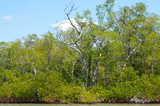Free Mangroves And Trees On Canal Royalty Free Stock Photo - 20118395