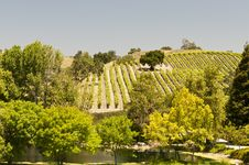 Free California Vineyard Stock Images - 20118614