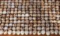Free Quail Eggs Stock Image - 20124721