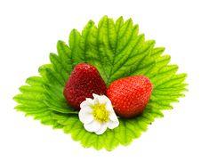 Free Strawberry Royalty Free Stock Photos - 20121318