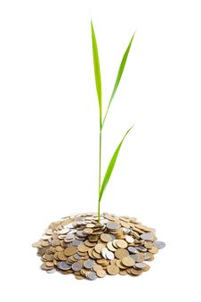 Young Green Plant Is Growing Out Of Heap Of Coins Stock Image