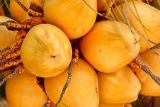 Free Coconut Bunch Stock Photo - 20122140