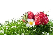 Free Fresh Strawberry On A Green Grass Royalty Free Stock Image - 20122846
