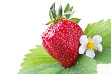 Free Fresh Strawberry On A Green Leaf Stock Photography - 20123052