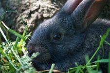 Free Little Mammal Rabbit On A Grass Royalty Free Stock Photography - 20123127