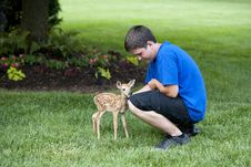 Boy With Baby Deer Stock Images