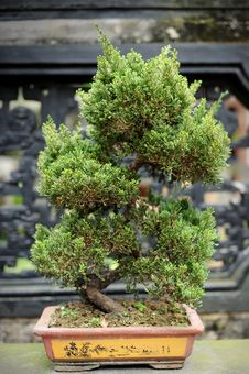 Free Bonsai Stock Photography - 20124672