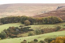 Free Leighon Valley, Dartmoor Stock Image - 20126151