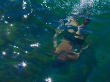 Free Scuba Diving Royalty Free Stock Photos - 20126498