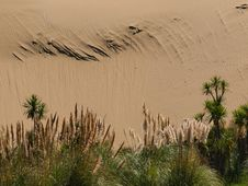 Free Sand Dune Background With Lush Vegetation Royalty Free Stock Photo - 20126765