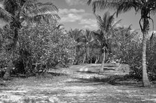 Free Tropical Island Royalty Free Stock Photos - 20126928
