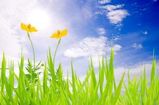 Free Green Grass Sky And Yellow Flower Stock Photography - 20127342