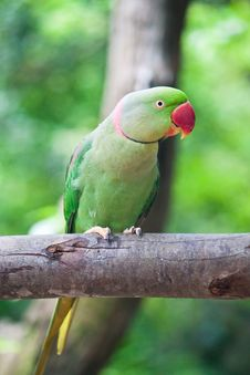 Free Green Parrot Bird Stock Photo - 20127710