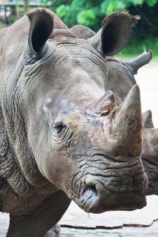 Free White Rhino Stock Images - 20128124
