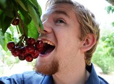 Free Teenage Boy Eating Cherries Off Of A Tree Stock Images - 20129604