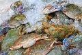 Free Crabs Fresh Royalty Free Stock Image - 20131146