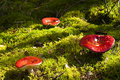 Free Toadstool Stock Photo - 20132550