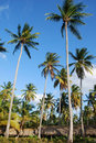 Free Coconuts Stock Images - 20138664