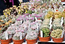 Free Cactus Plant Stock Photo - 20130100