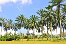 Free Tropical Royalty Free Stock Image - 20130316