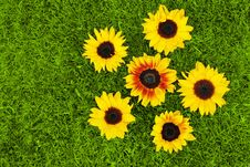 Free Sunflowers And Grass Royalty Free Stock Images - 20130709