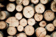 Free Tree Stump Background Stock Photo - 20131030