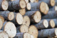 Free Tree Stump Background Stock Photography - 20131062