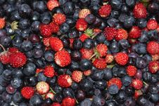 Free Strawberries And Blueberries Royalty Free Stock Images - 20133169