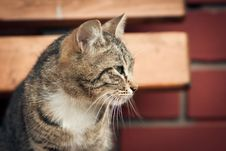 Free Cat Against A Wall Stock Image - 20133241