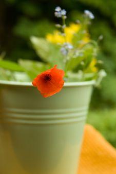 Free Small Poppy Flower Stock Photography - 20133912