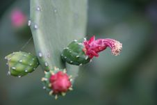Free Cactus Flower Stock Photography - 20134022