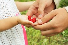 Free Berries In The Hand Royalty Free Stock Photos - 20134378