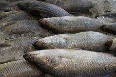 Free Fishes Stock Images - 20134464