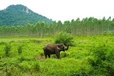 Free Elephant Royalty Free Stock Photography - 20135157